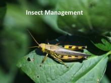 Insect Management tutorial photo