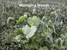 Managing Weeds photo