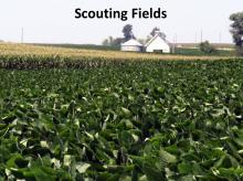Scouting Fields tutorial photo