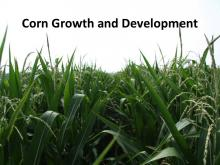 Corn Growth and Development tutorial photo