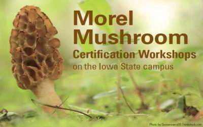 morel mushroom cerification