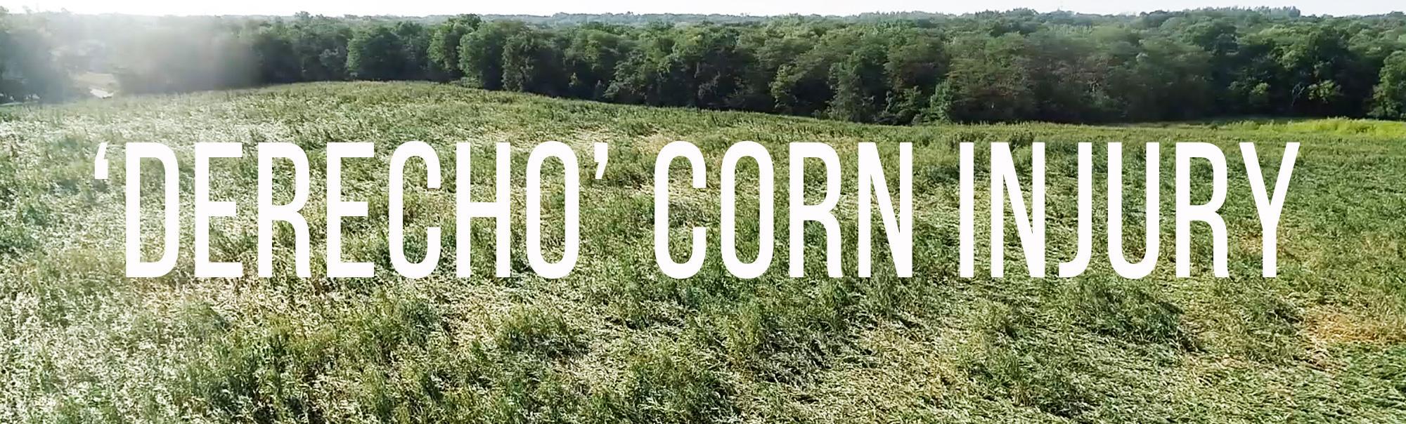 'Derecho' Corn Injury