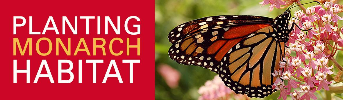 Planting Monarch Habitat