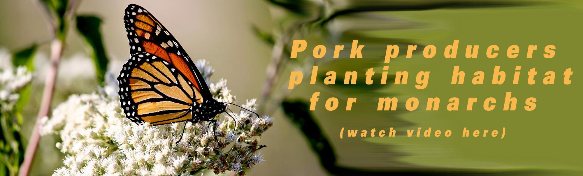 Pork producers planting habitat for monarchs