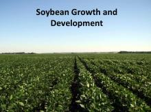 Soybean Growth and Development tutorial photo