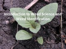 Intro to Weed Science and Weed Identification tutorial photo