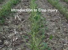 Intro to Crop Injury tutorial photo