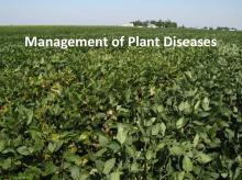 Management of Plant Diseases tutorial photo