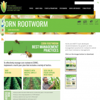 Best Management Practices for Corn Rootworm