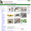 Iowa Insect Encyclopedia Information Notes